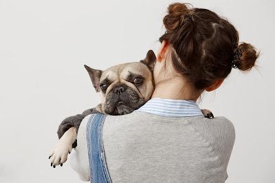Ya tengo más perros en casa... ¿Cómo integramos al nuevo miembro de la familia?