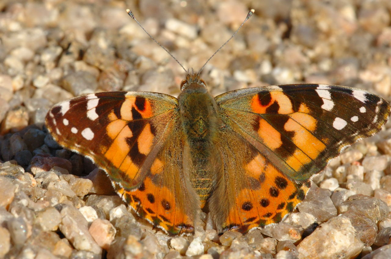 Michael J Perkins School Blog Bye Bye Butterflies