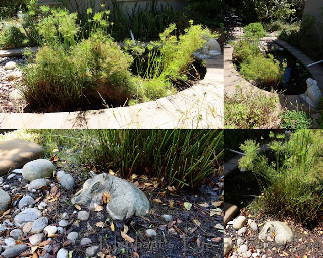 Our hippo with dwarf papyrus at Froggy Pond