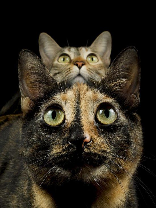 Andrés López 500px arte fotografia pets cachorros gatos bichinhos estimação fofura divertido