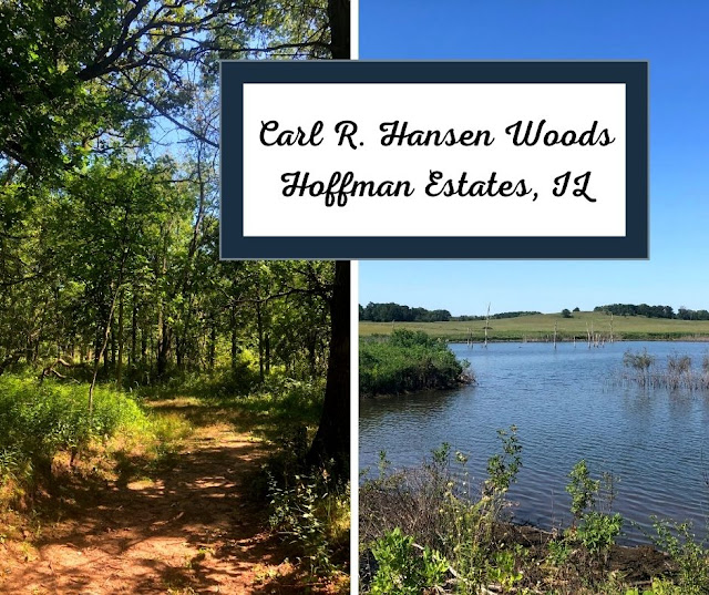 Winding the trails of Carl R. Hansen Woods and a Pond Full of Frogs in Hoffman Estates, IL