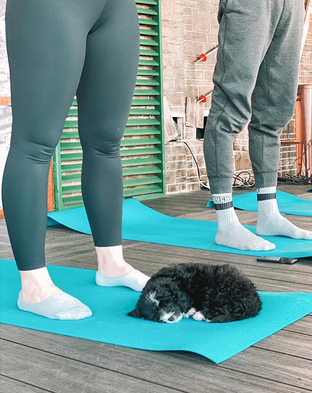 puppy yoga