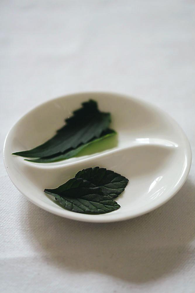 Blätter von Limetten Agastache und Aztekischem Süßkraut| im Blog für food, wine, travel & love von Arthurs Tochter kocht von Astrid Paul