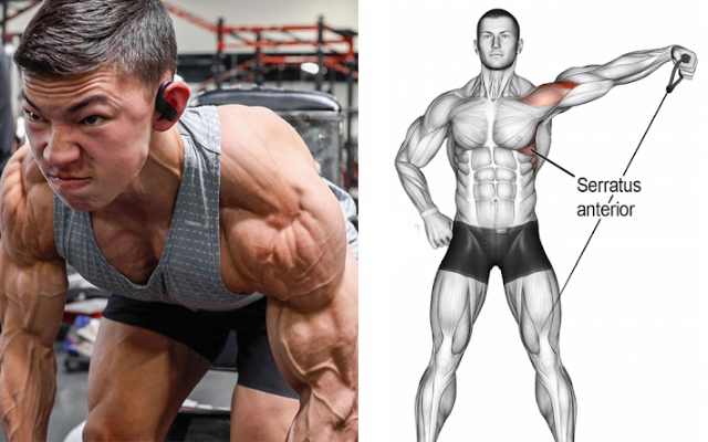 The Only 3 Exercises You Need To Do To Develop Terrible Delts