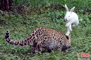 السيستم وقع والارنب افترس