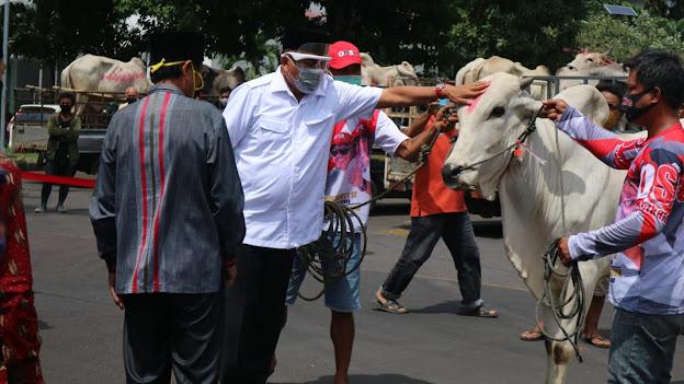 Gubernur Olly Dondokambey Salurkan 247 Sapi Kurban Untuk Masjid di Sulut