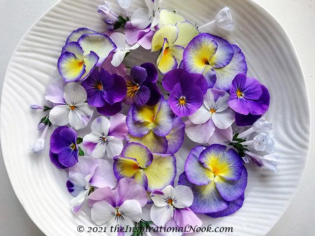 Pansies, violas, purple, yellow and white, Viriginia Bluebells