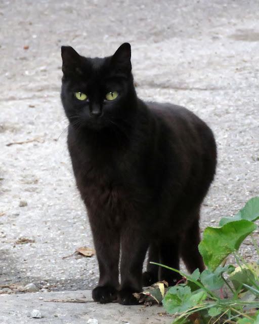 Black cat, Via delle Grazie, Livorno