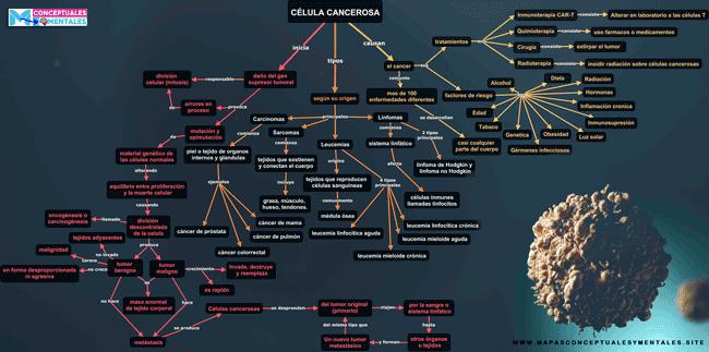 Mapa conceptual de la célula cancerosa como se produce