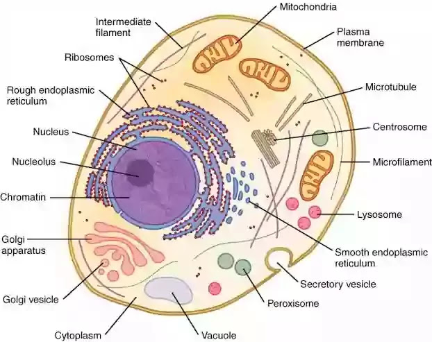what are the two types of cell division