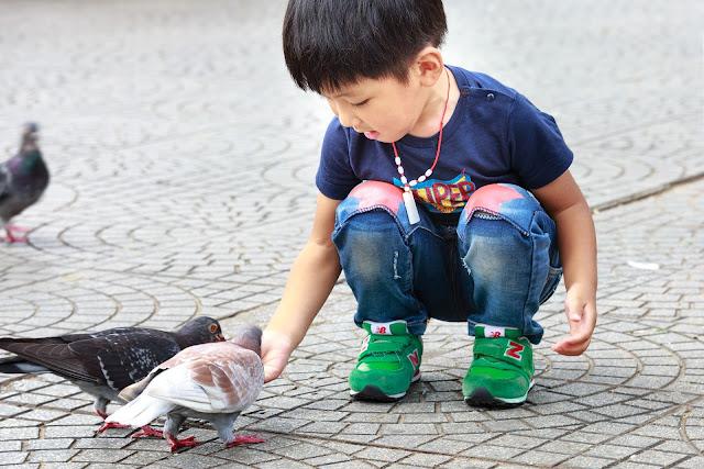 पशु पक्षियों का भोजन एवं सहायक अंग  Class 3 EVS Hamara Parivesh Chapter 6
