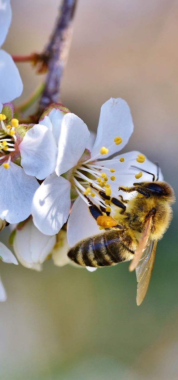 A bee sucking nectar.