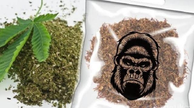 Jual Tembakau Gorila, Pemuda Ini Dituntut 10 Tahun