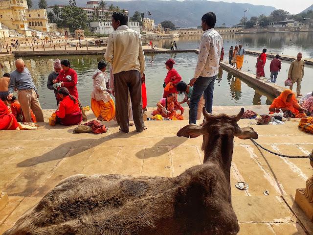 Things to do in Pushkar India