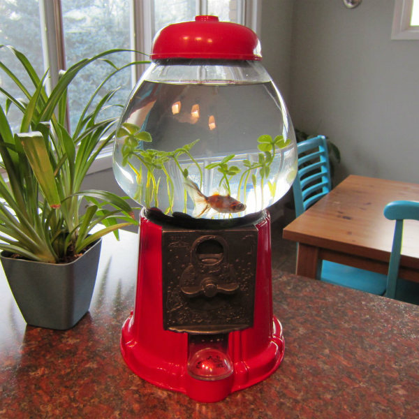 20 Creative And Unusual Fish Tank Aquariums Spicytec