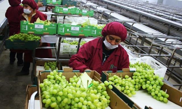 Agroexportaciones Perú