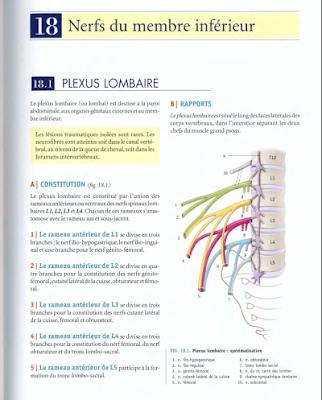 Télécharger Livre Gratuit ANATOMIE - Membre Inférieur - Nerfs du MI pdf