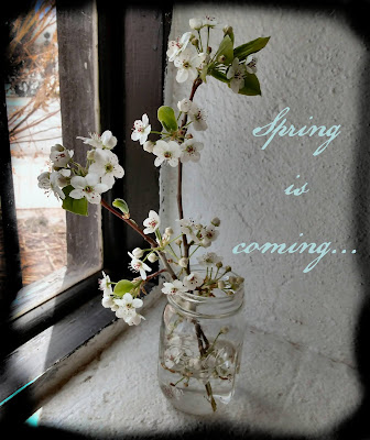 simple flowering plum in mason ball jar spring
