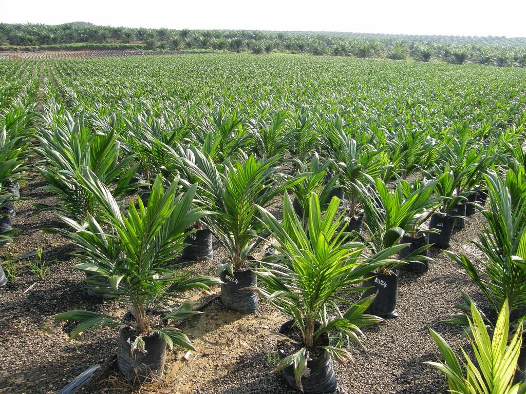 Agrofinanz Gmbh