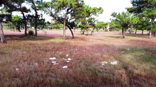 Gia Lai: Đồi cỏ hồng mộng mơ đầy... 'rác thải và kim tiêm'