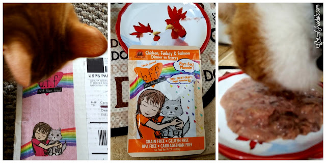 Orange tabby smelling package and tasting Weruva BFF OMG! cat food