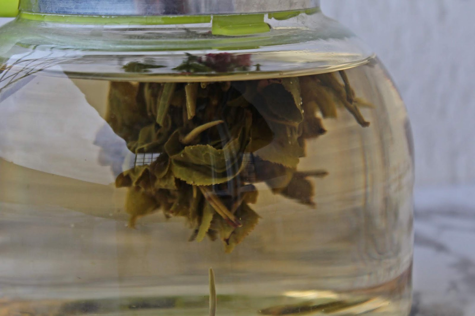 Herbatka kwitnąca