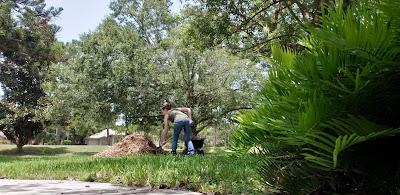 Woodchip Pile 3