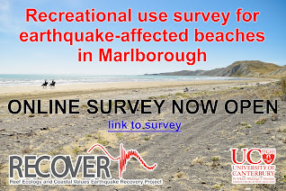 Marlborough beach survey