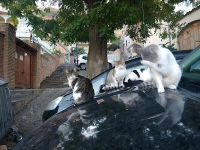 Tbilisi koty