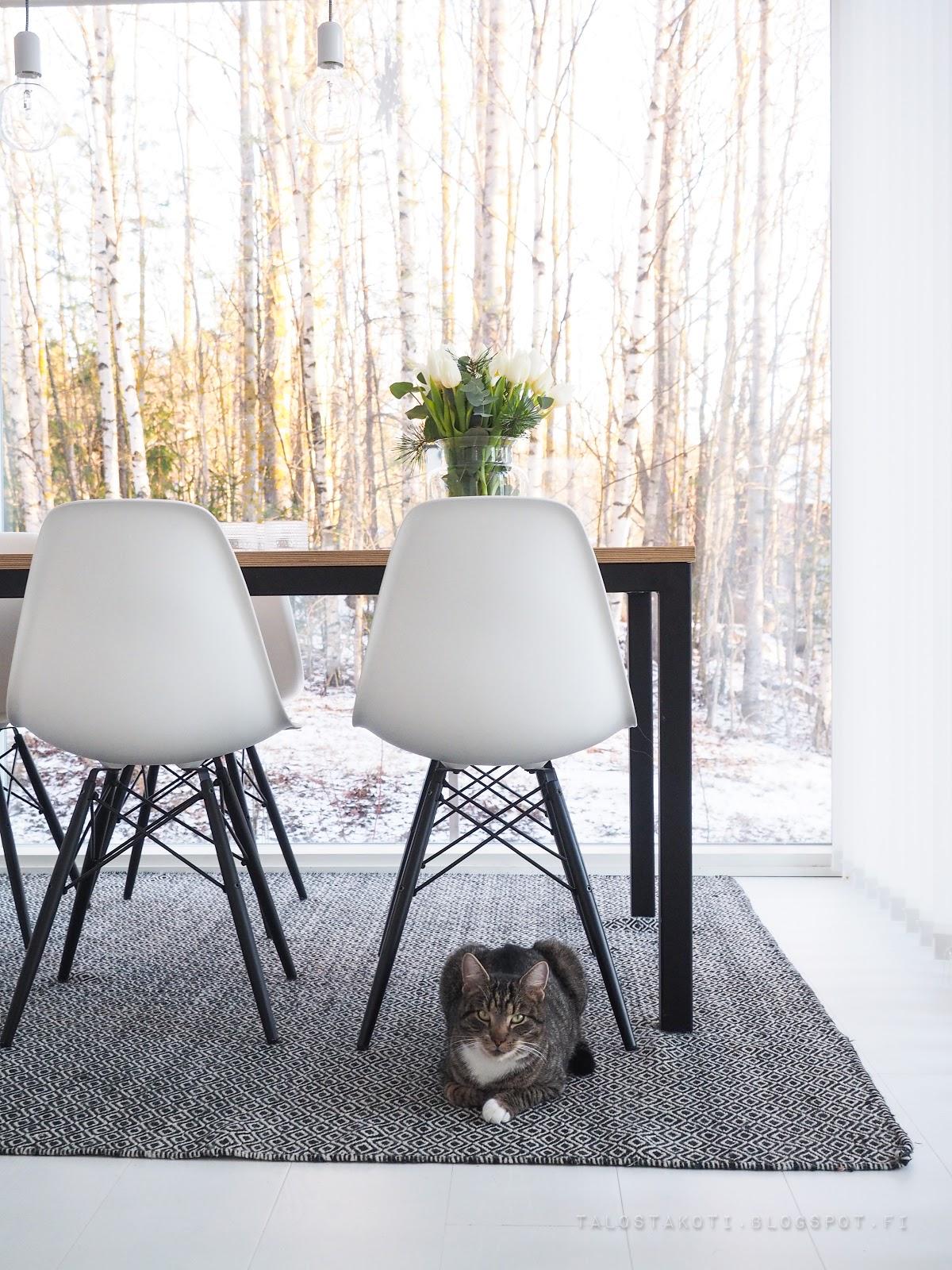 Kissa, ruokailutila, keittiö, maisema