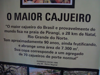 Foto Mateussf - Matéria Cajueiros gigantes - BLOG LUGARES DE MEMÓRIA