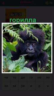 655 слов горилла спряталась в зарослях 1 уровень