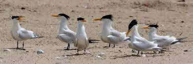 LA RESERVE ORNITHOLOGIQUE DE KALISSAYE (ROK) : Parc, animaux, visite, tourisme, sauvage, oiseaux, LEUKSENEGAL, Dakar, Sénégal, Afrique