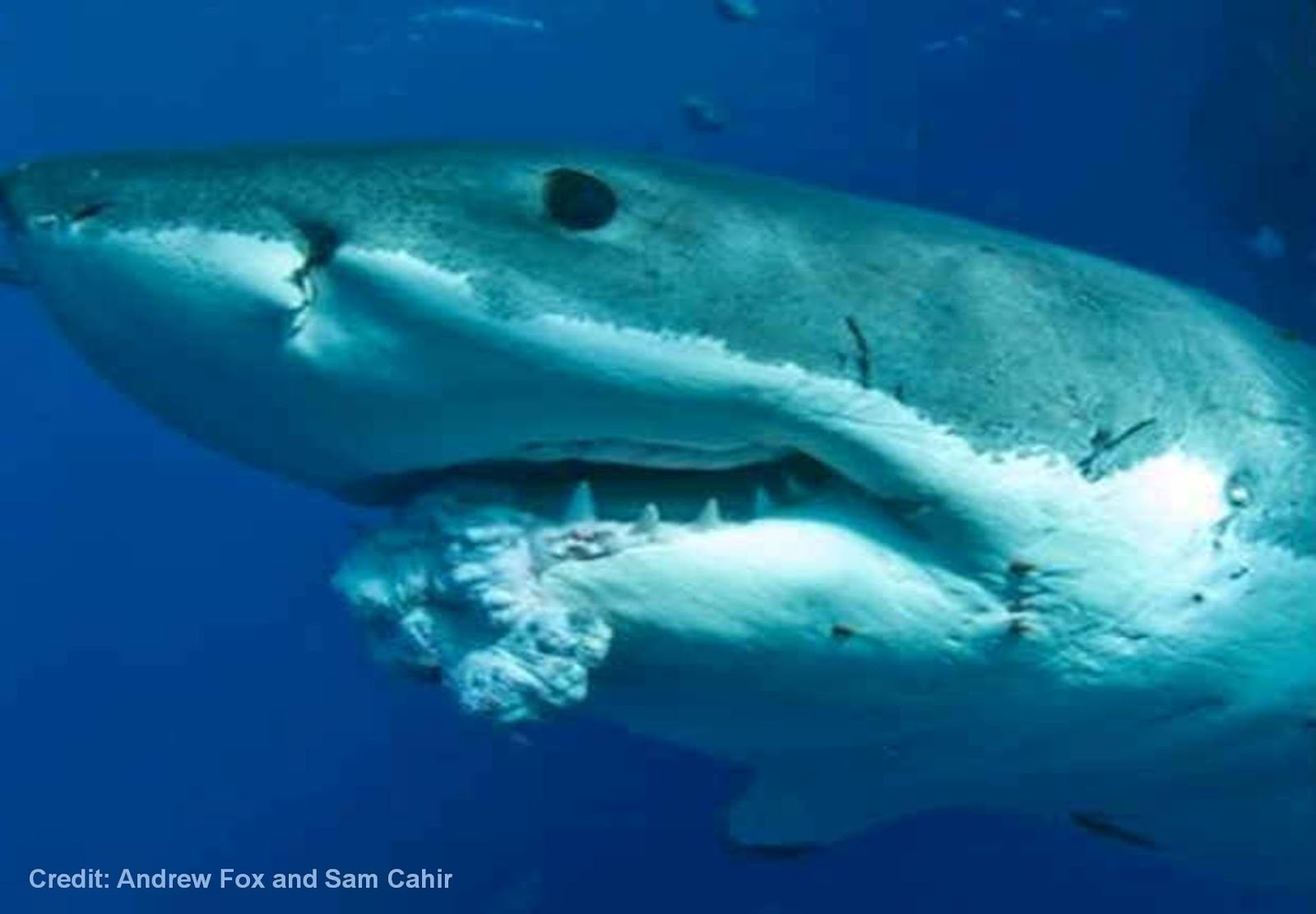 هل تمتلك أسماك القرش العلاج النهائي للسرطان ؟