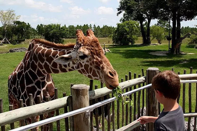 zoo Dreams Interpretations and Meanings