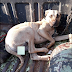 Dog rescued after it was tied up and gang raped (Photo)