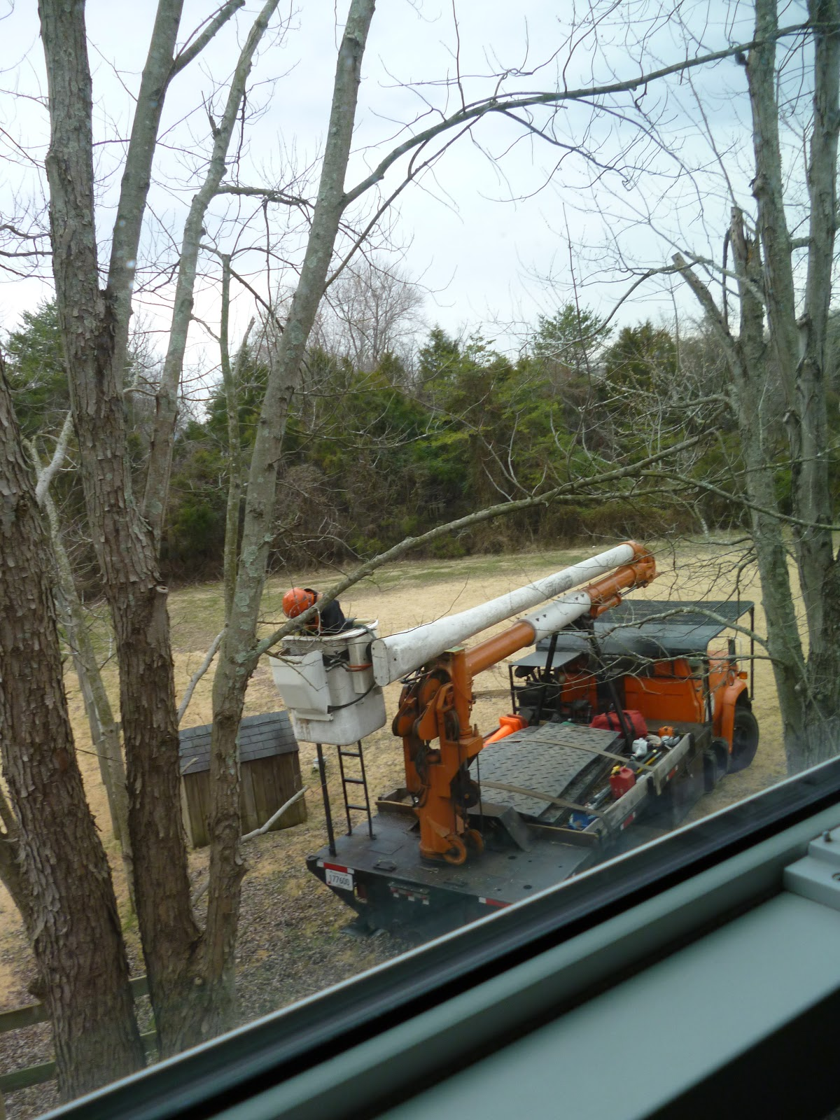 Darlaville Tree Trimmers