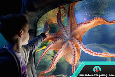 How to Take Care of a Sea Octopus at Aquarium