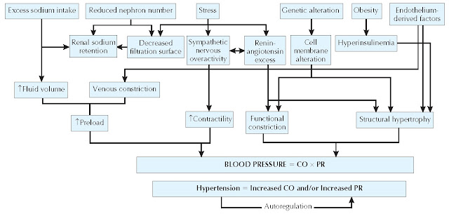 Factors Involved in the Control of Blood Pressure
