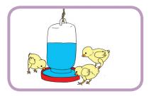 Gantilah air minum ayam setiap hari www.simplenews.me