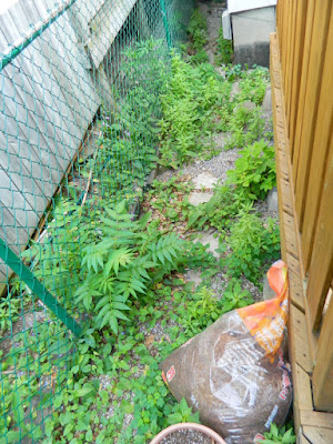 Toronto Summer Weeding and Garden Cleanup Before East York by Paul Jung Gardening Services--a Toronto Gardening Company