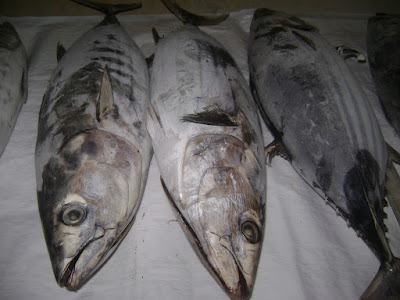 High Quality Tuna Skipjack Frozen for Your Restaurant