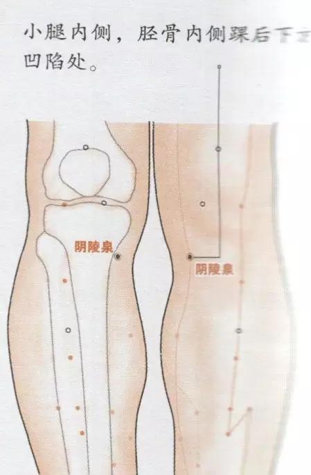 點準穴位,痘痘自覺走人(消化系統)