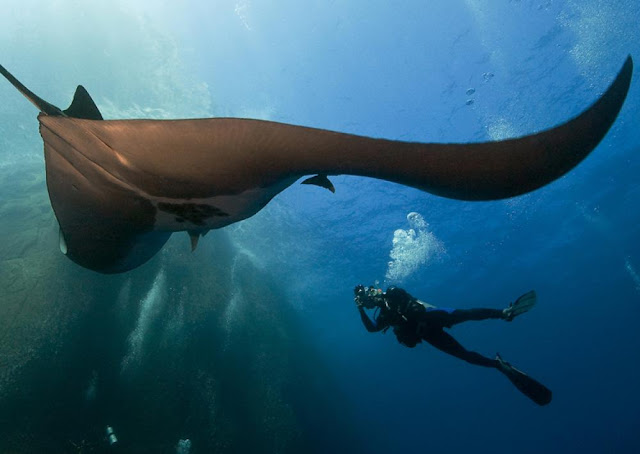 Discover the creatures of the sea at Manta Point