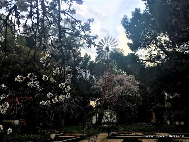 visitar la floración de almendros en Madrid
