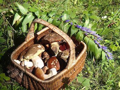 grzyby 2017, grzyby w sierpniu, grzyby na Orawie, jadalne koźlarze, jadalne borowiki, koźlarz czerwony