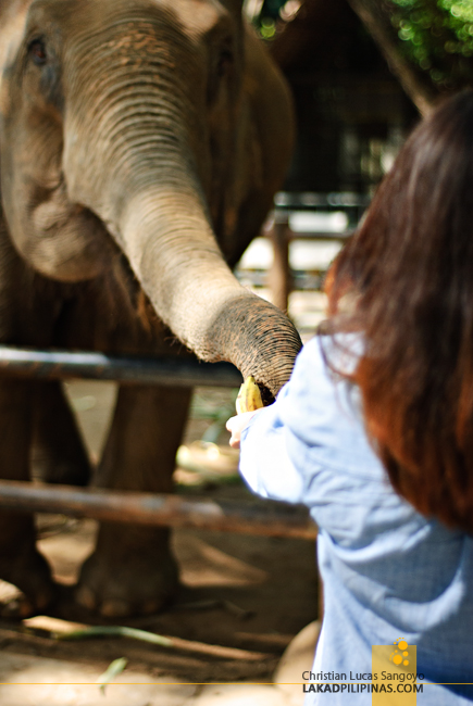 Samphran Elephant Ground & Zoo Thailand