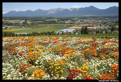 Những cánh đồng hoa đẹp