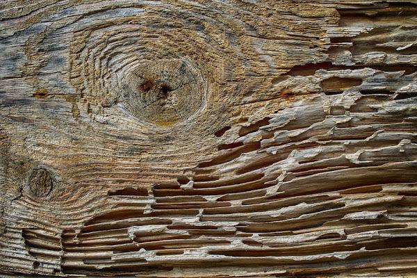 kayu melapuk