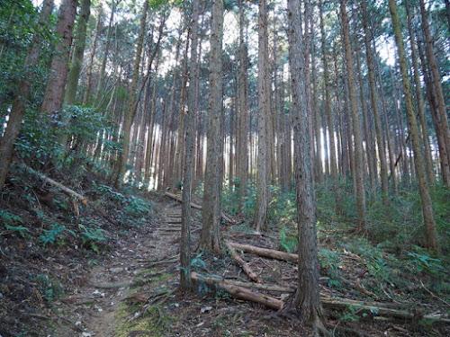 植林帯の中を行く